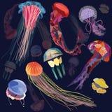 Insieme delle meduse illustrazione vettoriale