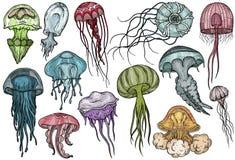 Insieme delle meduse Raccolta del mare illustrazione di stock