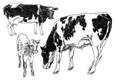 Insieme delle mucche disegnate a mano Fotografia Stock Libera da Diritti