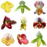 Insieme delle orchidee Fotografia Stock