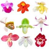 Insieme delle orchidee Immagini Stock