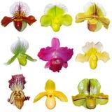 Insieme delle orchidee Immagine Stock