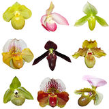 Insieme delle orchidee Fotografie Stock Libere da Diritti