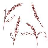 Insieme delle orecchie dell'illustrazione disegnata a mano del riso, vettore Immagine Stock Libera da Diritti