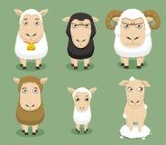 Insieme delle pecore Fotografia Stock