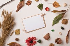 Insieme delle piante asciutte di autunno e della carta di carta dell'invito fotografia stock