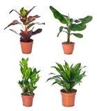 Insieme delle piante d'appartamento in flowerpots Fotografia Stock
