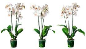 Insieme delle piante d'appartamento in flowerpots Fotografie Stock Libere da Diritti