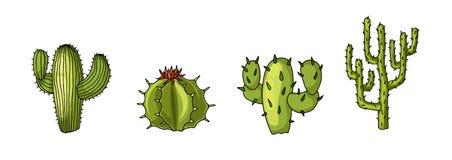 Insieme delle piante del cactus del deserto Illustrazione realistica di vettore isolata su bianco illustrazione vettoriale