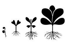 Insieme delle piante della siluetta Fotografia Stock