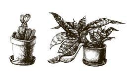 Insieme delle piante disegnate a mano nei vasi Fotografia Stock Libera da Diritti