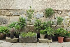 Insieme delle piante e degli alberi dei bonsai Fotografia Stock