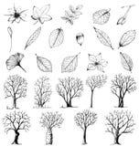 Insieme delle piante e degli alberi disegnati a mano Immagine Stock