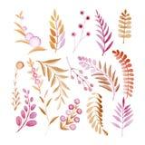 Insieme delle piante ornamentali, dei fiori, delle foglie, dei frutti e delle bacche fatti in acquerelli Fotografia Stock