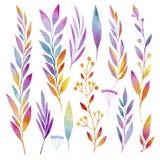Insieme delle piante ornamentali, dei fiori, delle foglie, dei frutti e delle bacche fatti in acquerelli Immagine Stock