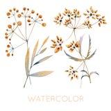 Insieme delle piante ornamentali, dei fiori, delle foglie, dei frutti e delle bacche fatti in acquerelli Fotografia Stock Libera da Diritti
