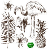Insieme delle piante tropicali e degli uccelli disegnati a mano Fotografia Stock