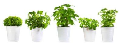 Insieme delle piante verdi conservate in vaso Immagini Stock