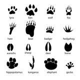 Insieme delle piste animali differenti Fotografie Stock Libere da Diritti