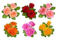 Insieme delle rose differenti di colori isolate su fondo bianco immagine stock libera da diritti