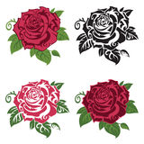 Insieme delle rose multicolori Fotografia Stock
