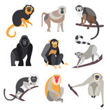 Insieme delle scimmie e delle scimmie Illustrazione di vettore Fotografia Stock