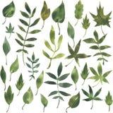 Insieme delle siluette dalle foglie in acquerello Fotografia Stock Libera da Diritti