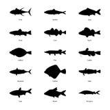 Insieme delle siluette dei pesci, illustrazione di vettore Fotografie Stock Libere da Diritti