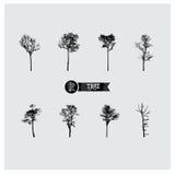 Insieme delle siluette dell'albero di vettore Fotografie Stock Libere da Diritti