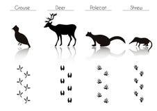 Insieme delle siluette nere degli uccelli e di Forest Animals: Urogallo, cervo, Immagine Stock Libera da Diritti