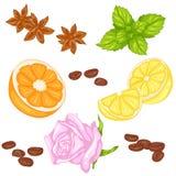 Insieme delle spezie di frutti Immagine Stock