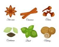Insieme delle spezie differenti anice stellato, cannella, chiodi di garofano, cardamomo verde, illustrazione vettoriale