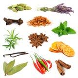 Insieme delle spezie e delle erbe differenti Immagini Stock