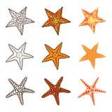 Insieme delle stelle marine Immagini Stock