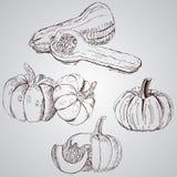Insieme delle verdure Alimento fresco Linea delle zucche attinta un fondo bianco illustrazione di stock