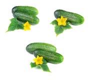 Insieme delle verdure del cetriolo con le foglie ed i fiori Fotografia Stock Libera da Diritti