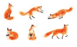 Insieme delle volpi lanuginose rosse dell'acquerello nel moto su bianco Volpe di seduta, volpe di sonno, giocando volpe, volpe di fotografia stock libera da diritti