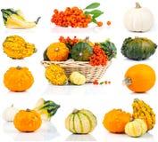 Insieme delle zucche di autunno Immagini Stock Libere da Diritti