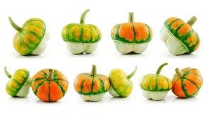 Insieme delle zucche e dell'ibrido maturi della verdura della zucca Fotografia Stock Libera da Diritti