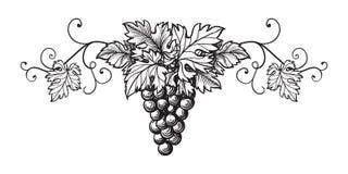 Insieme dello schizzo di monocromio dell'uva Immagini Stock Libere da Diritti