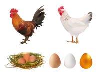 Insieme di agricoltura Gallo realistico, gallina, nido, uova Illustrazione di vettore Azienda agricola Immagini Stock