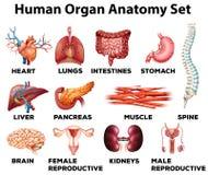 Insieme di anatomia dell'organo umano Immagini Stock Libere da Diritti