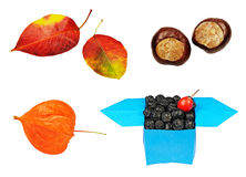 Insieme di autunno della natura Fotografie Stock Libere da Diritti