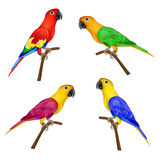 Insieme di bei pappagalli variopinti su fondo bianco Fotografia Stock