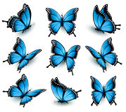 Insieme di belle farfalle blu Fotografia Stock