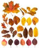 Insieme di belle foglie di autunno immagini stock