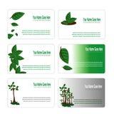 Insieme di biglietto da visita botanico delle foglie verdi Immagini Stock Libere da Diritti