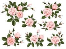 Insieme di boutonniere della rosa di rosa Fotografia Stock Libera da Diritti