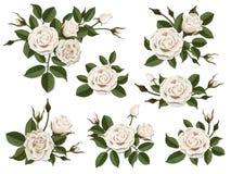 Insieme di boutonniere della rosa di bianco Fotografia Stock Libera da Diritti