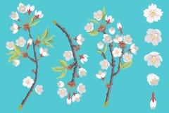 Insieme di Cherry Blossom Branch illustrazione di stock